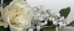 Roses-1420724_1280